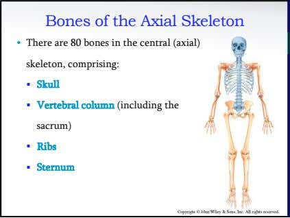 Bones of the Axial Skeleton • There are 80 bones in the central (axial) skeleton,