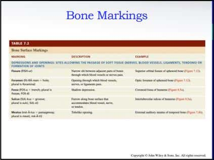 Bone Markings Copyright © John Wiley & Sons, Inc. All rights reserved.