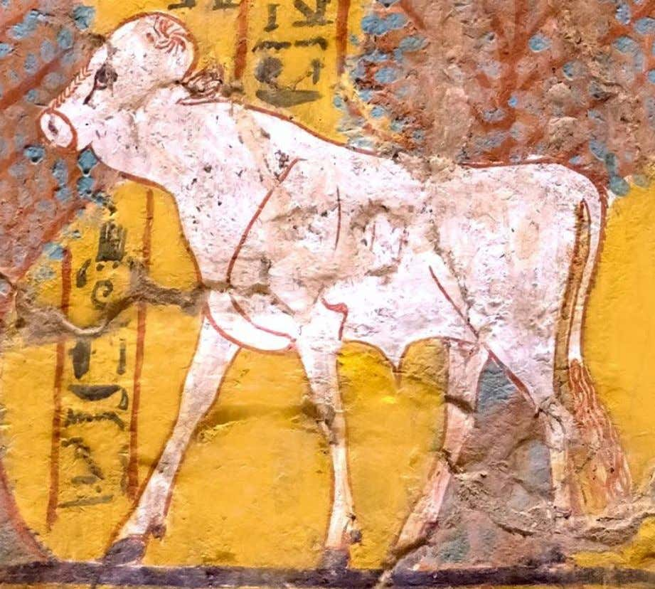 "VI part: Ra in His sacred forms of calf and bull Detail from the ""House of"