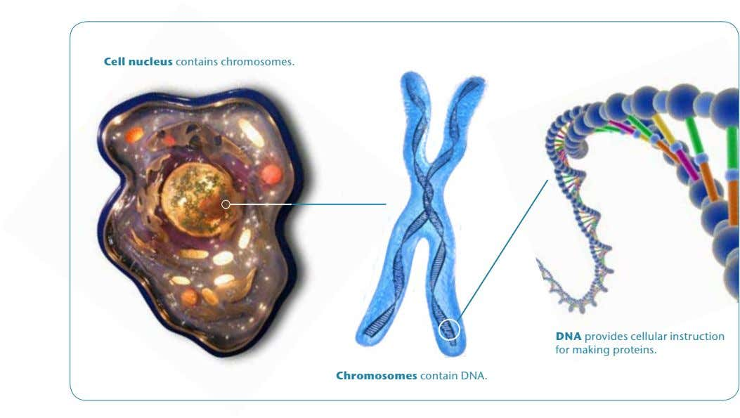 Cell nucleus contains chromosomes. DNA provides cellular instruction for making proteins. Chromosomes contain DNA.