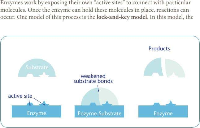 "Enzymes work by exposing their own ""active sites"" to connect with particular molecules. Once the"