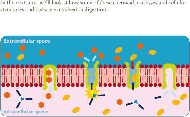 In the next unit, we'll look at how some of these chemical processes and cellular