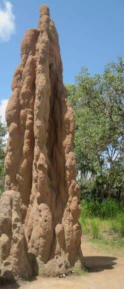 Termites in Australia 21 ARBE2100 Week 3 03