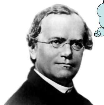 characteristics of an organism. my idea ! me too ! •   •   Gregor Mendel