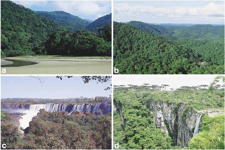 Introduction 787 FIGURE 1. The two major vegetation types of the Atlantic Forest: (a) the coastal