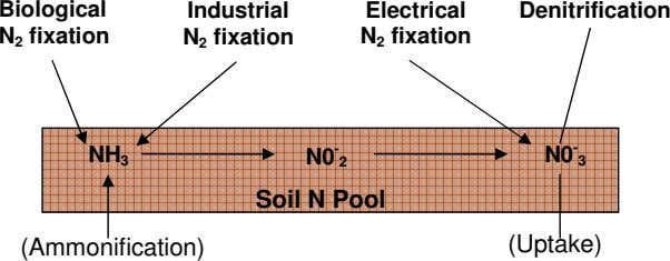Biological N 2 fixation Industrial N 2 fixation Electrical N 2 fixation Denitrification NH 3