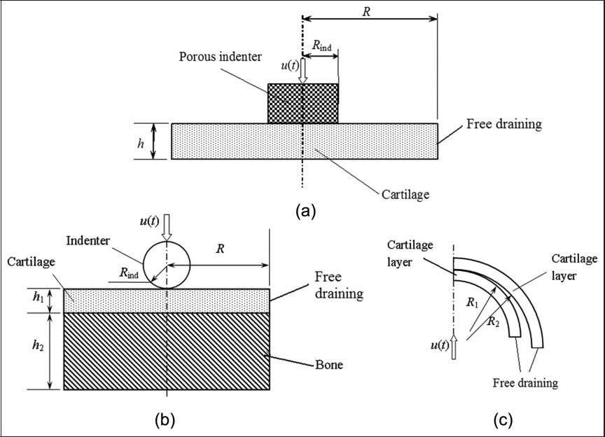 Meng et al. 1011 Figure 1. Schematic diagrams of (a) the porous flat-ended cylindrical indentation test,