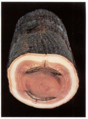 problem is the confusion about wood. It is seldom defined. Wounding experiments on heartwood- forming trees,