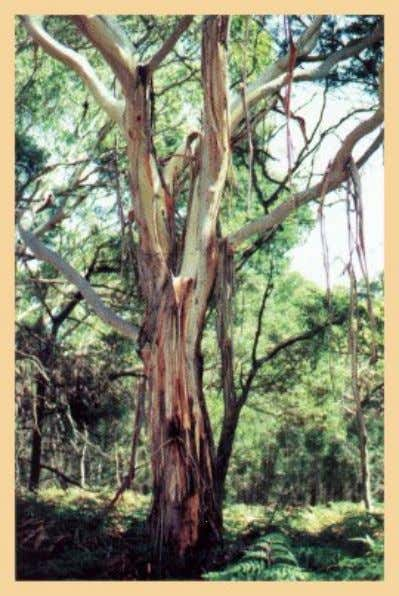 some unique enzyme that fails to work, thus causing death. Eucalyptus species have chemicals in their