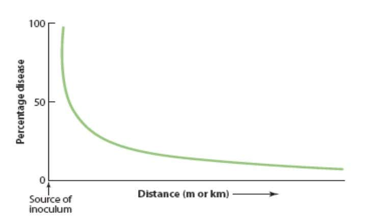 distance, is called disease gradient curve (spatial pattern)  disease – gradient curve: The percentage of