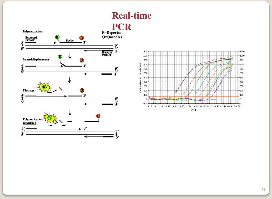 Real-time PCR 31
