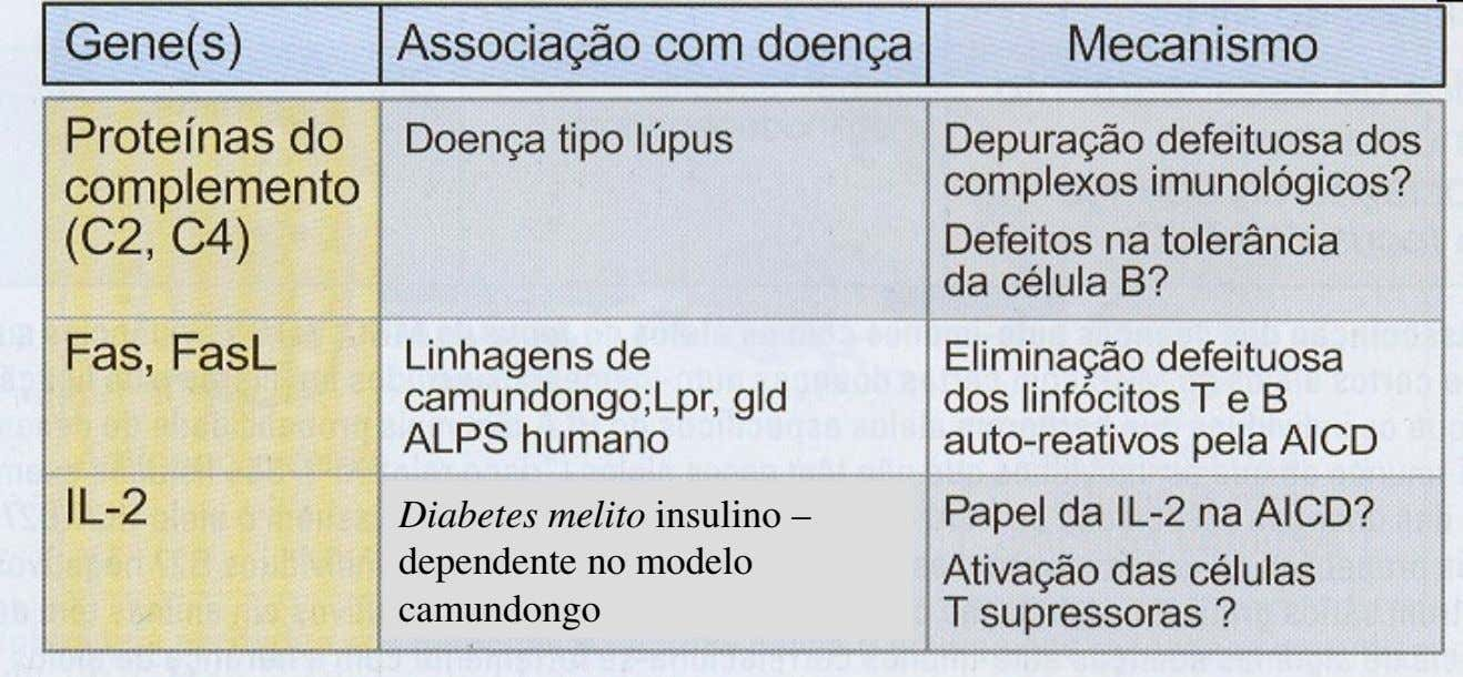 Diabetes melito insulino – dependente no modelo camundongo