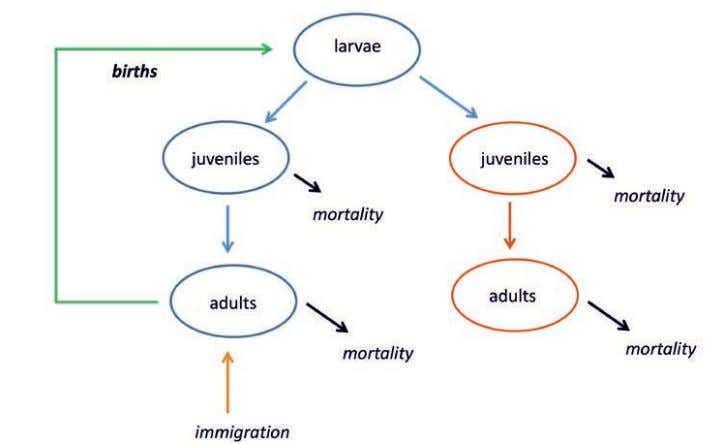 Complex systems p Figure 1. Simply by observing infertile adult populations (red), all other populations can