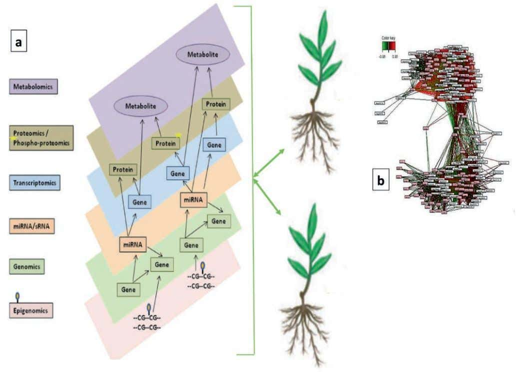 * Adaptation to abiotic stress in perennial species (BURST) p A. Integrative diagram of various levels