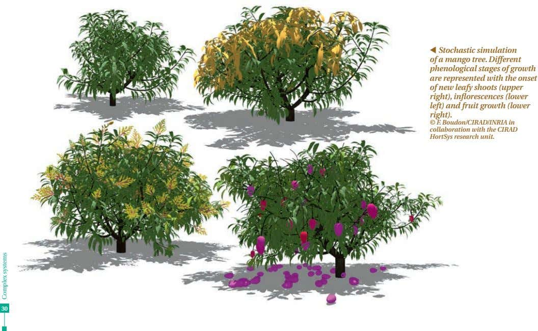 t Stochastic simulation of a mango tree. Different phenological stages of growth are represented with