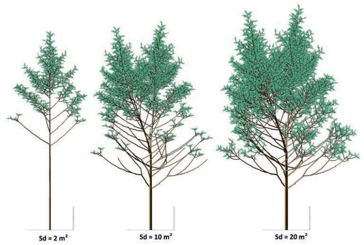 et al. , 2009. Annals of Botany. 103(8): 1173-1186. p A GreenLab model simulation of the