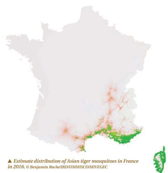 p Estimate distribution of Asian tiger mosquitoes in France in 2016. © Benjamin Roche/IRD/UMMISCO/MIVEGEC