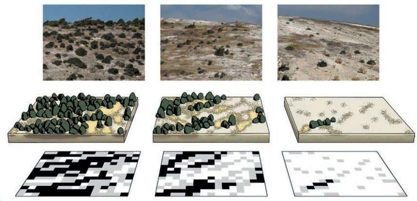 information on the CASCADE project : www.cascadis-project.eu t Formalization of an arid ecosystem (top) into a