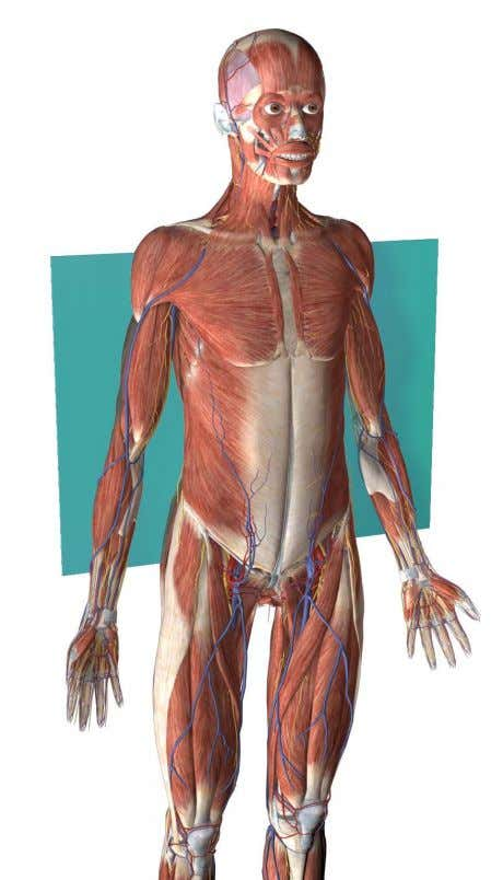 Frontal (coronal) plane: Divides the body into front and back portions. www.visiblebody.com