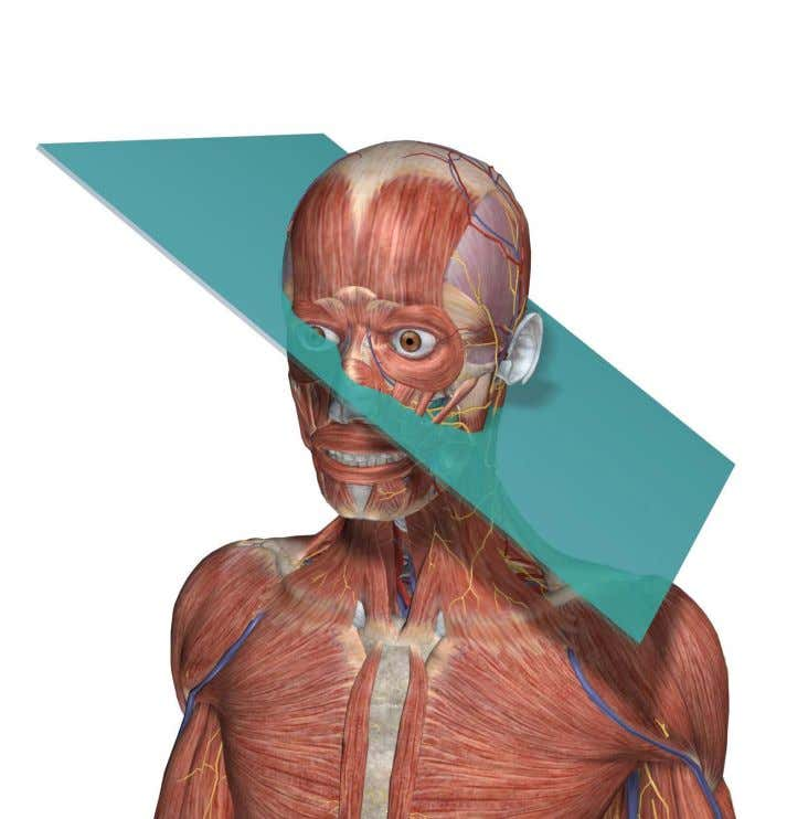 Oblique plane: Passes through a structure or the entire body at an angle. www.visiblebody.com