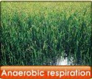 1. Types of respiration in plants : a) aerobic respiration b) anaerobic respiration