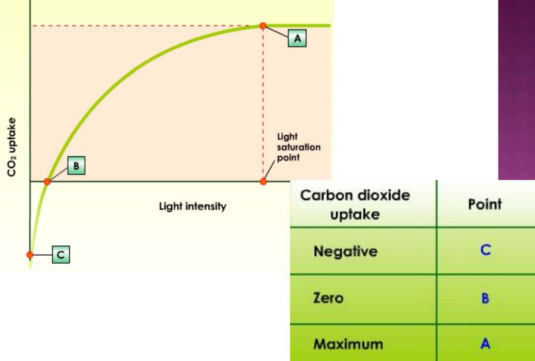 Graph shows CO2 uptake in plants related to light intensity