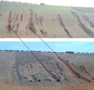 Technology Scenario: Protection of pastures affected by gullies and rills, by fencing and the plantation of