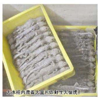 August 2013) Detention for illicitly purchasing 2200 geckos Sina.com.cn, August 1 s t 2013- In mid-July,