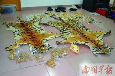 Read More 2 Man detained for selling tiger products online Gxnews.com.cn, August 9 t h 2013-