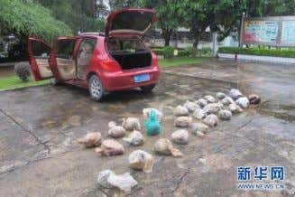 trade in Beijing, based upon its regular monitoring of the situation. Read More Fangchenggang seizes 28