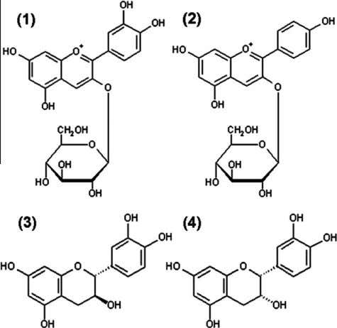 )-epicatechin ( 4 ; Fig. 1 ), were analyzed by HPLC-DAD. Fig. 1. Structures of compounds