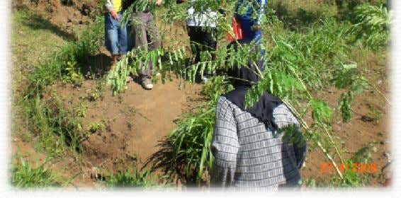 School Activities Reforestation