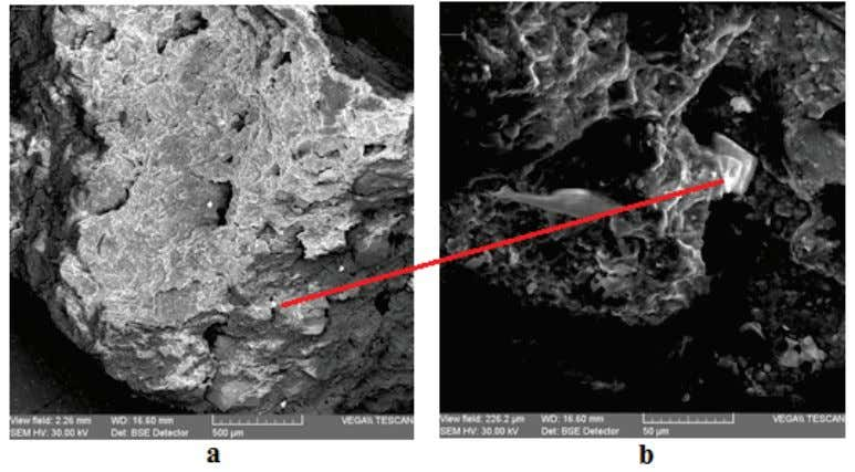 FIRST INTERNATIONAL CONGRESS ON THE ANTHROPOLOGY OF SALT Figure 1. SEM images of sample no. 6: