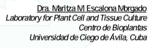 Dra. Maritza M. Escalona Morgado Laboratory for Plant Cell and Tissue Culture Centro de Bioplantas