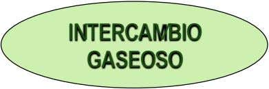 INTERCAMBIO GASEOSO