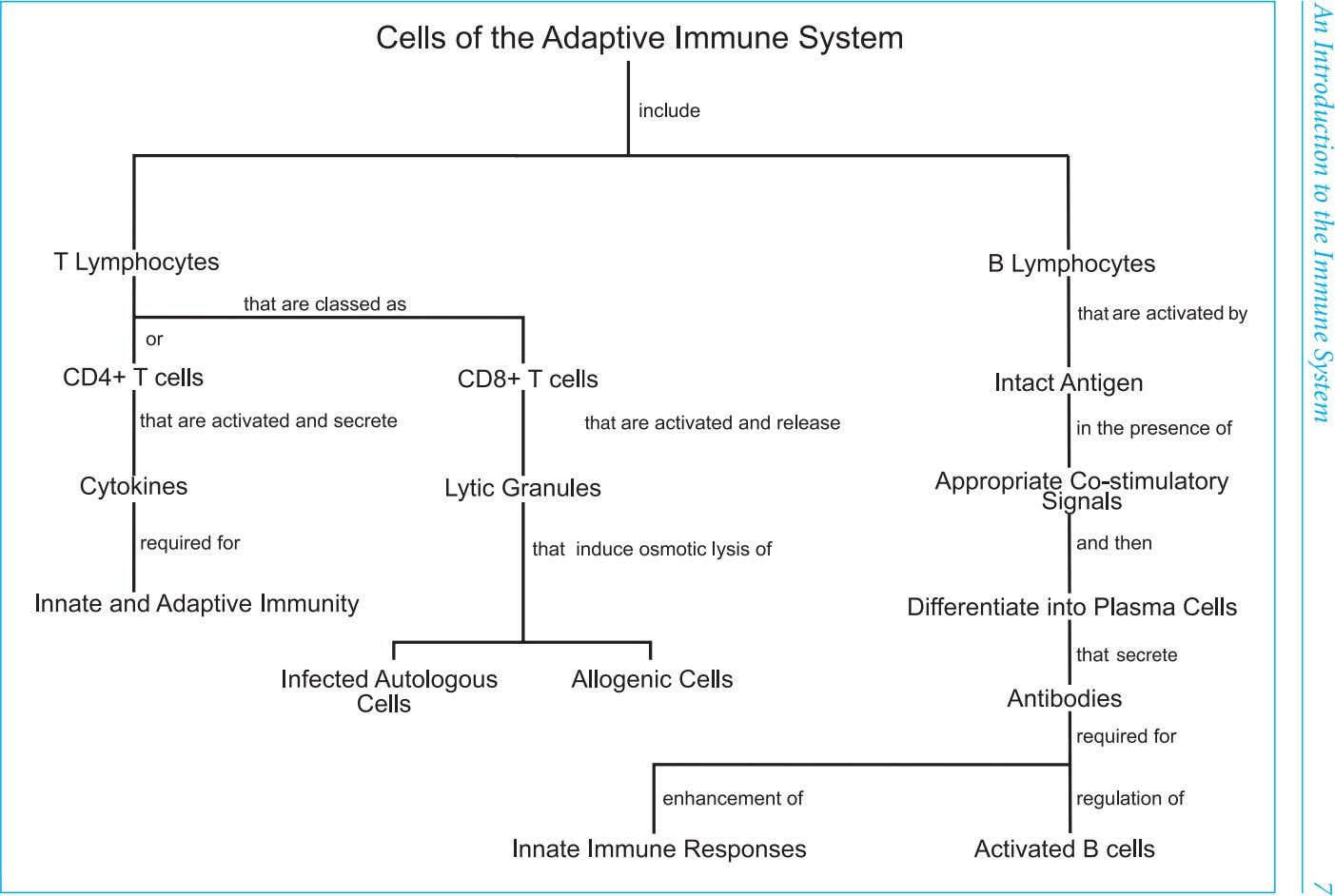 7An Introduction to the Immune System