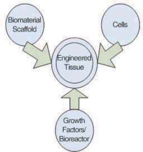 Biomaterials & scaffolds for tissue engineering REVIEW Fig. 1 Tissue engineering triad of cells, signals (provided