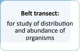 Belt transect: for study of distribu=on and abundance of organisms