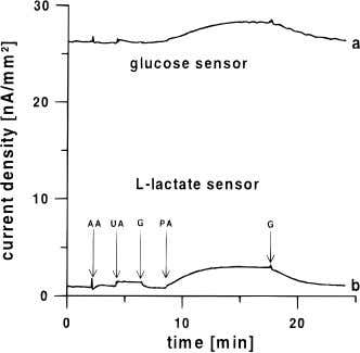 Figure 4. Run-in behavior of an integrated glucose - lactate device which was stored dry in