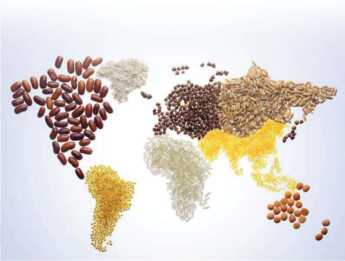 2013 Alltech Global Feed Summary 7