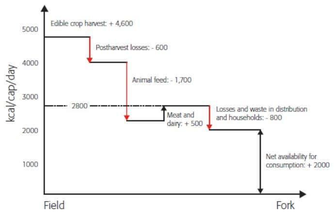 28: Estimate of global fo od losses, waste and conversion Source: [Lundqvist et al., 2008] IP/A/ITRE/NT/2010-08
