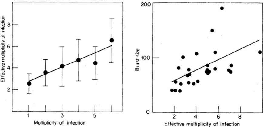 of infection was often higher than the initial value myself. Figure 3. Correlation between multiplicity of