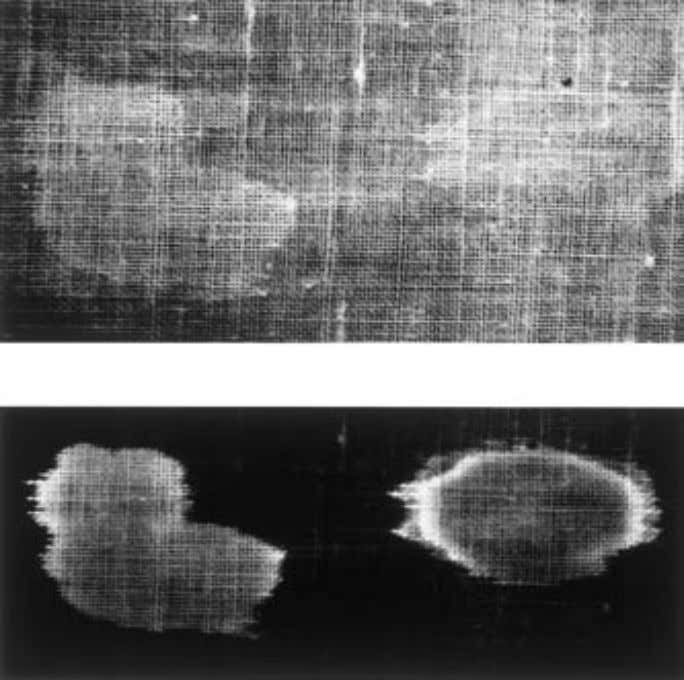 the interference filter provides a clear image of the stain. FIG. 2— Semen stains on white
