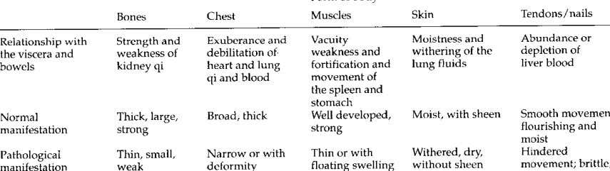 Form of body Skin Tendons/nails Bones Chest Muscles Abundance or Vacuity Relationship with Strength and