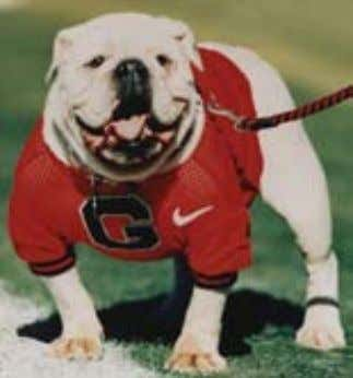 """Hood's Ole Dan"" 1956-1967 A Real Georgia Bulldog UGA IV ""The Dog of the Decade"" ""Uga"