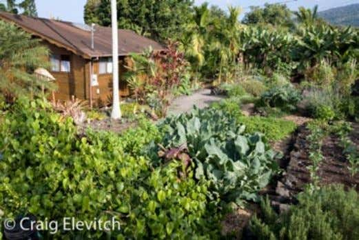 Left: A small vegetable garden near the entrance to a home tends to get daily