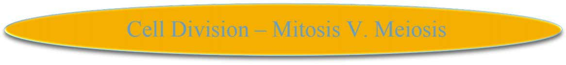Cell Division – Mitosis V. Meiosis