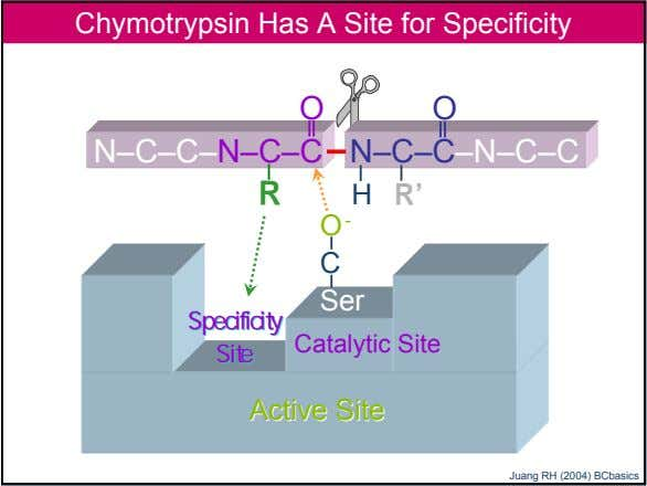 Chymotrypsin Has A Site for Specificity O O N–C–C–N–C–C N–C–C–N–C–C R H R' O -