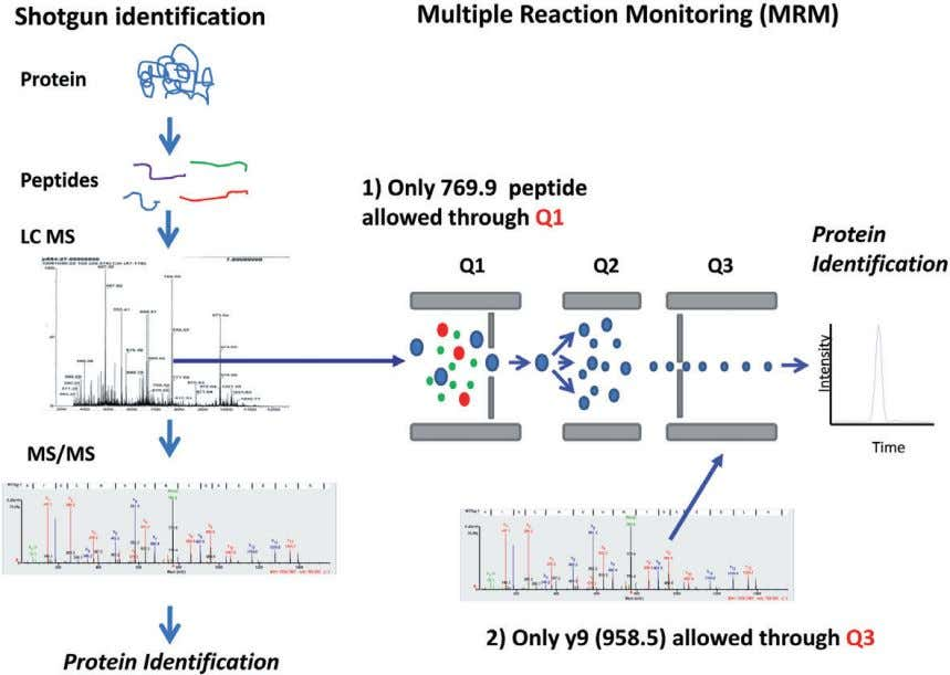 CS. Ang et al . 88 Figure 3. Schematic of protein biomarker identification and quantitation by