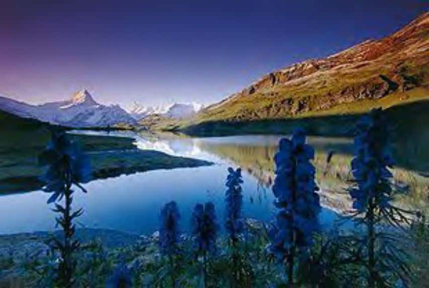 Nature Bachalpsee in the Swiss Alps; generally mountainous areas are less affected by human activity Much